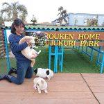 千葉の老犬ホーム九十九里パークに…東京から柴犬のおっとり男の子のクウくん(16さい)が入園しました。編