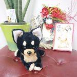 千葉の老犬ホーム九十九里パークから~あけましておめでとうございます!(小型犬)その3編