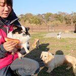 千葉の老犬ホーム九十九里パークの~ホットなワンちゃん(HOT DOG)いらっしゃ~い!(小型犬)その1編