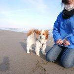 千葉の老犬ホーム九十九里パークこうれいの~九十九里海岸の海さんぽ2018にみんなと一緒に行ってらっしゃ~い!(小型犬)その5編