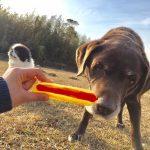 千葉の老犬ホーム九十九里パークのホットなワンちゃん達(HOT DOG)いらっしゃ~い!(中型犬・大型犬)その3編