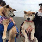千葉の老犬ホーム九十九里パークこうれいの~九十九里海岸の海さんぽ2018にみんなと一緒に行ってらっしゃ~い!(中型犬・大型犬)その1編