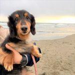 千葉の老犬ホーム九十九里パークこうれいの~九十九里海岸の海さんぽ2018にみんなと一緒に行ってらっしゃ~い!(小型犬)その3編