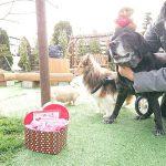 千葉の老犬ホーム九十九里パークから…2月は節分で福はうち~女の子達はハッピーバレンタインも楽しもう~!(中型犬・大型犬)その4編