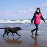 千葉の老犬ホーム九十九里パークこうれいの~九十九里海岸の海さんぽ2018にみんなと一緒に行ってらっしゃ~い!(中型犬・大型犬)その3編