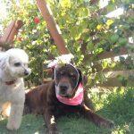 千葉の老犬ホーム九十九里パークの~女の子も男の子もみんなで一緒にひな祭り。(中型犬・大型犬)その4編