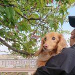 千葉の老犬ホーム九十九里パークのワンちゃん達、サクラ咲く作田川で春のお花見に行ってらっしゃ~い~!(小型犬)その4編