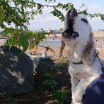 千葉の老犬ホーム九十九里パークのワンちゃん達、サクラ咲く作田川で春のお花見に行ってらっしゃ~い~!(小型犬)その6編