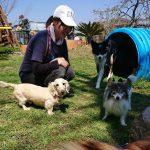 千葉の老犬ホーム九十九里パークに…東京からパピヨンの女の子のララちゃん(15さい)が入園しました。編