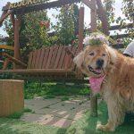 千葉の老犬ホーム九十九里パークの~女の子も男の子もみんなで一緒にひな祭り。(中型犬・大型犬)その3編