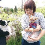 千葉の老犬ホーム九十九里パークに…埼玉からヨークシャテリアの女の子のララちゃん(13さい)が入園しました。編