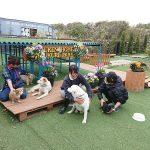 千葉の老犬ホーム九十九里パークに…栃木から日本犬の男の子のジョンビーくん(14さい)が入園しました。編