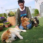 千葉の老犬ホーム九十九里パークに…茨木から柴犬の男の子のゴンタくん(15さい)が入園しました。編