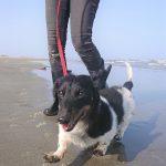 千葉の老犬ホーム九十九里パーク恒例の~九十九里海岸の海さんぽ、みんなで一緒にいってらっしゃ~い!(小型犬)その4編