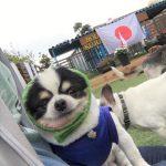 千葉の老犬ホーム九十九里パークからワッショ~イ!サッカー・ワールドカップで盛りあがろう!(小型犬)その1編