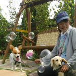 千葉の老犬ホーム九十九里パークから~雨あめあがれ可愛いてるてる坊主たち(小型犬)その6編