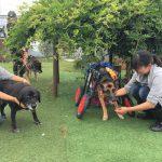 千葉の老犬ホーム九十九里パークから~雨あめあがれ可愛いてるてる坊主たち(中型犬・大型犬)その4編
