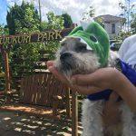 老犬ホーム九十九里パークからワッショ~イ!サッカー・ワールドカップで盛りあがろう!(小型犬・中型犬)その6編