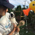 老犬ホーム九十九里パークの~今年はお風呂っぽいね2018年ミニミニプール開きだよ!(小型犬)その1編