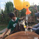 老犬ホーム九十九里パークの~今年はお風呂っぽいね2018年ミニミニプール開きだよ!(小型犬)その3編