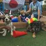 老犬ホーム九十九里パークからワッショ~イ!サッカー・ワールドカップで盛りあがろう!(中型犬・大型犬)その1編