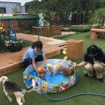 老犬ホーム九十九里パークの~今年はお風呂っぽいね2018年ミニミニプール開きだよ!(小型犬)その4編