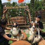 老犬ホーム九十九里パークの~今年はお風呂っぽいね2018年ミニミニプール開きだよ!(小型犬)その5編