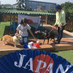 老犬ホーム九十九里パークからワッショ~イ!サッカー・ワールドカップで盛りあがろう!(中型犬・大型犬)その3編