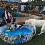 老犬ホーム九十九里パークの~今年はお風呂っぽいね2018年ミニミニプール開きだよ!(小型犬)その6編