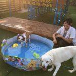 老犬ホーム九十九里パークの~今年はお風呂っぽいね2018年ミニミニプール開きだよ!(小型犬・中型犬)その7編