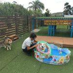 老犬ホーム九十九里パークの~今年はお風呂っぽいね2018年ミニミニプール開きだよ!(中型犬・大型犬)その1編