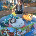 老犬ホーム九十九里パークの~今年はお風呂っぽいね2018年ミニミニプール開きだよ!(中型犬・大型犬)その2編