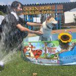 老犬ホーム九十九里パークの~今年はお風呂っぽいね2018年ミニミニプール開きだよ!(中型犬・大型犬)その3編