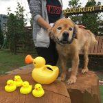 老犬ホーム九十九里パークの~今年はお風呂っぽいね2018年ミニミニプール開きだよ!(中型犬・大型犬)その4編