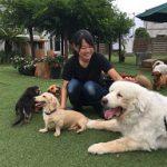 千葉の老犬ホーム九十九里パークに…神奈川からグレートピレニーズの男の子のハナコくん(12さい)が入園しました。編