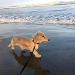 涼しくなってきましたね~ワンちゃん達と一緒に秋の海さんぽにいってきま~す!(小型犬)その3編