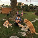 2018年夏空の緑広がる広大なドックランで~ワンちゃん達と楽しく過ごそう!(小型犬・中型犬・大型犬)その8編