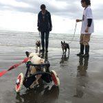 涼しくなってきましたね~ワンちゃん達と一緒に秋の海さんぽにいってきま~す!(小型犬)その7編