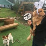 いたずら好きの可愛いカボチャ達見~つけた、みんなで一緒にハッピーハロウィーン!(小型犬)その5編