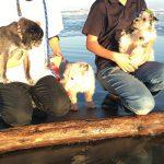涼しくなってきましたね~ワンちゃん達と一緒に秋の海さんぽにいってきま~す!(小型犬)その8編