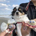 老犬ホーム九十九里パークこうれいの…九十九里海岸の海さんぽにいってきま~す!(小型犬)その1編