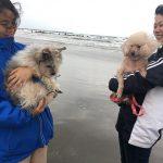 老犬ホーム九十九里パークこうれいの…九十九里海岸の海さんぽにいってきま~す!(小型犬)その7編