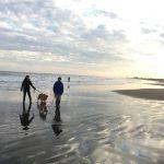 老犬ホーム九十九里パークこうれいの…九十九里海岸の海さんぽにいってきま~す!(中型犬・大型犬)その3編