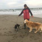 老犬ホーム九十九里パークこうれいの…九十九里海岸の海さんぽにいってきま~す!(中型犬・大型犬)その4編