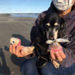 千葉の老犬ホーム九十九里パークに…東京からミニチュアダックスフンドの男の子の桃太郎くん(11さい)が入園しました。編