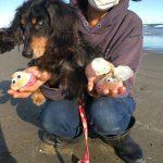 老犬ホーム九十九里パークこうれいの…九十九里海岸の海さんぽにいってきま~す!(小型犬)その2編
