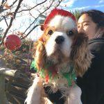 九十九里パークから~ワンちゃん達のハッピーメリークリスマス!(小型犬・中型犬・大型犬)その8編