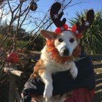 九十九里パークから~ワンちゃん達のハッピーメリークリスマス!(中型犬・大型犬)その1編
