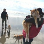 2019年も海さんぽ~九十九里海岸に、思い出とあしあと一緒にのこそうね!(小型犬・中型犬)その6編
