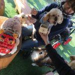 ハートと豆とぶHAPPYバレンタインだよ~!(小型犬)その6編